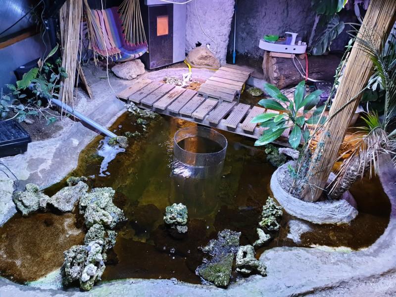 "Présentation de ma serre ""Nuit Tropicale"" avec bassin marin 20190323"
