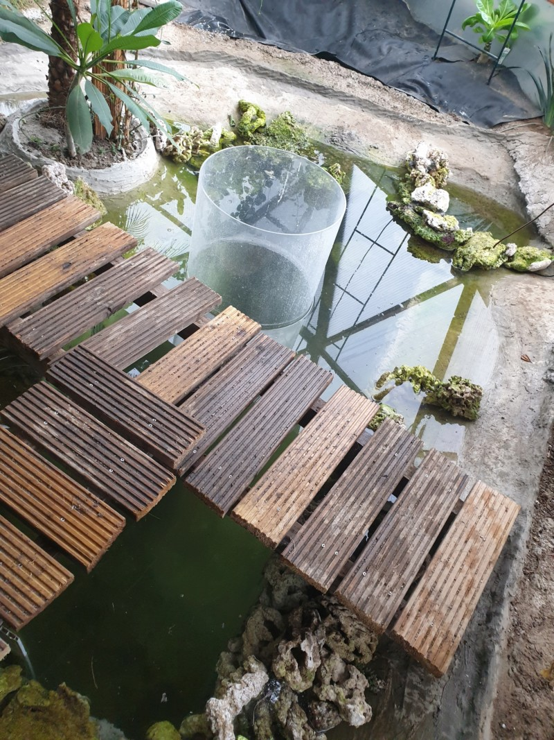 "Présentation de ma serre ""Nuit Tropicale"" avec bassin marin 20190328"