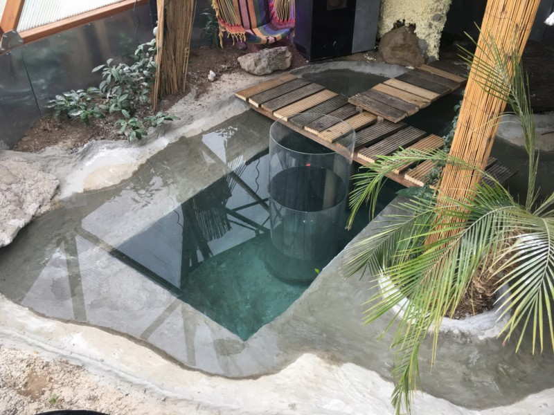 "Présentation de ma serre ""Nuit Tropicale"" avec bassin marin 20190371"