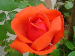 ::Desfile de Rosas AMDA::Si te perdiste alguna firma de este desfile entra aquí 3c5a7b10