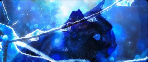 Aurora Cats Stecki10