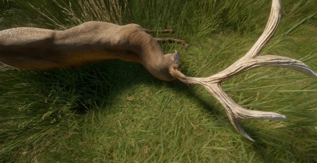 Ciervo mulo nivel 6 20200812