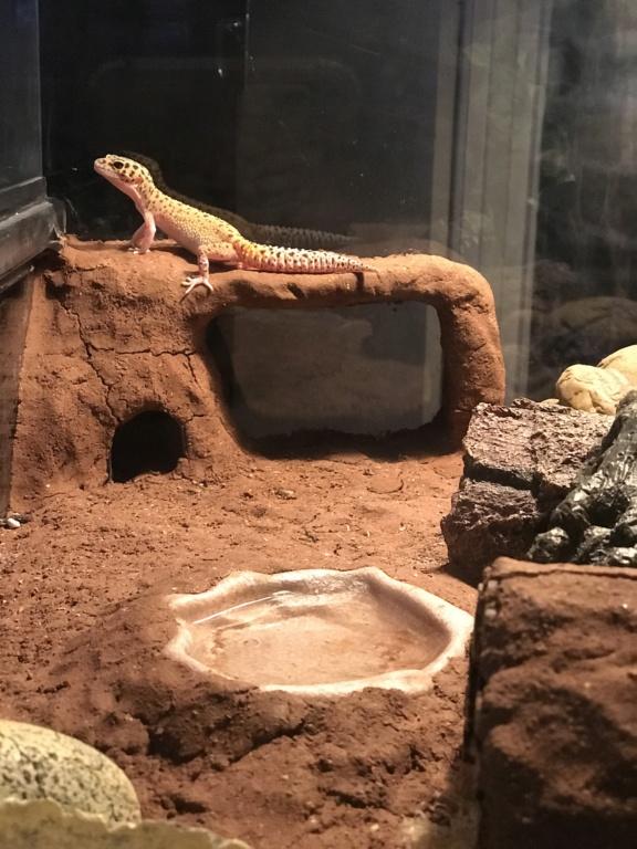 Terrarium gecko bien adapté ?  80cd1c10