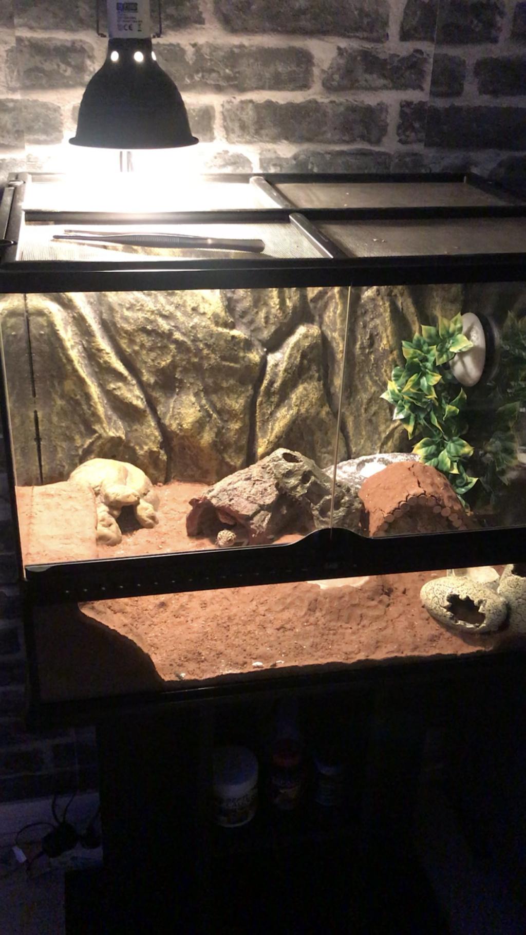 Terrarium gecko bien adapté ?  Fc5a2510