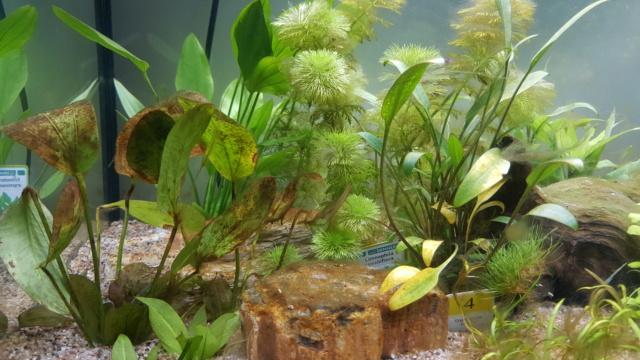 Rio 125 Probleme de croissance des plantes 20200914