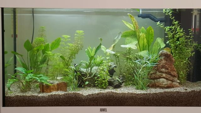 Rio 125 Probleme de croissance des plantes 20201011