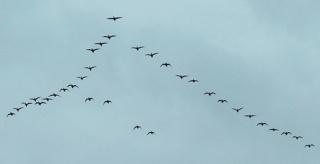 Las golondrinas vuelan hacia la primavera Golond10