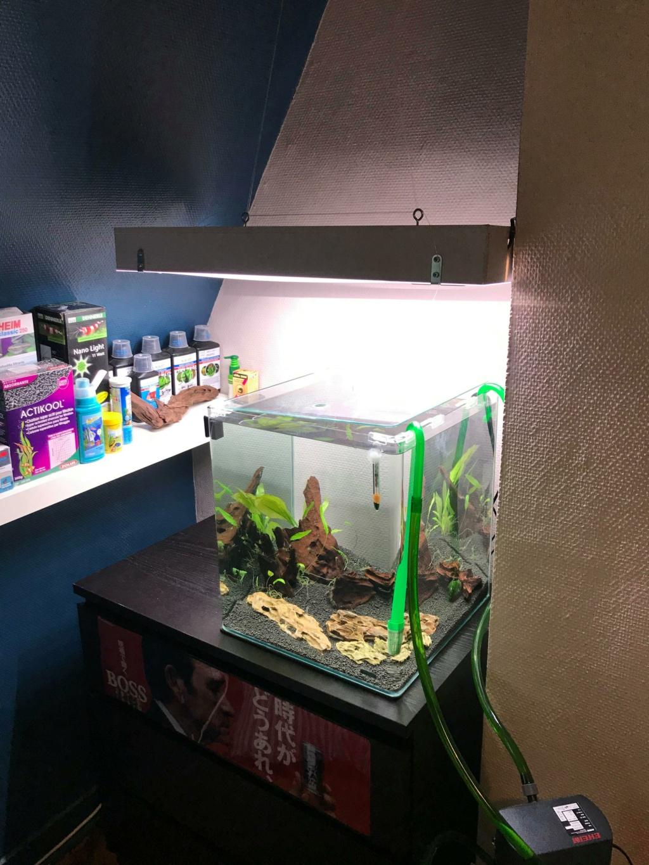 Présentation Aquarium et demande de conseils!  Bac10
