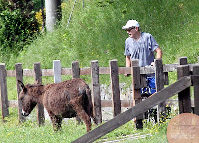 George Clooney's bicycle ride in Como - and his little ass! Donkey28