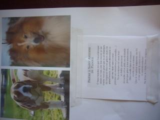 Little de Coralie et un autre chien perdu en Slovénie, diffusez svp!! - Page 8 P1230210