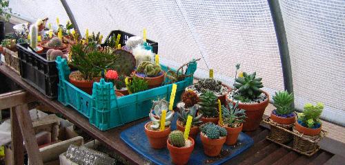 hivernage 2009 Img_8430