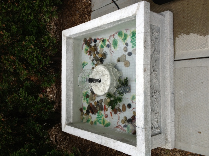Premier bassin de jardin Photo111