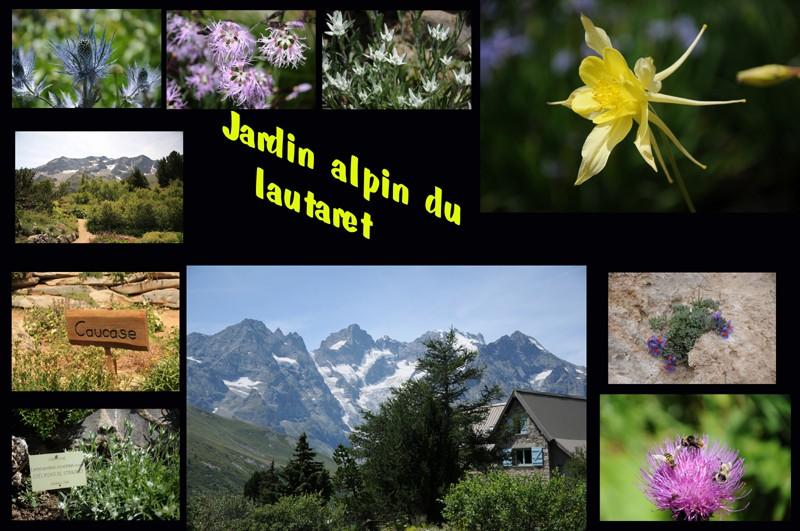 jardin alpin du lautaret Jardin10