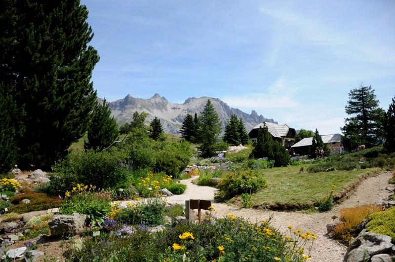 jardin alpin du lautaret Nik_0010