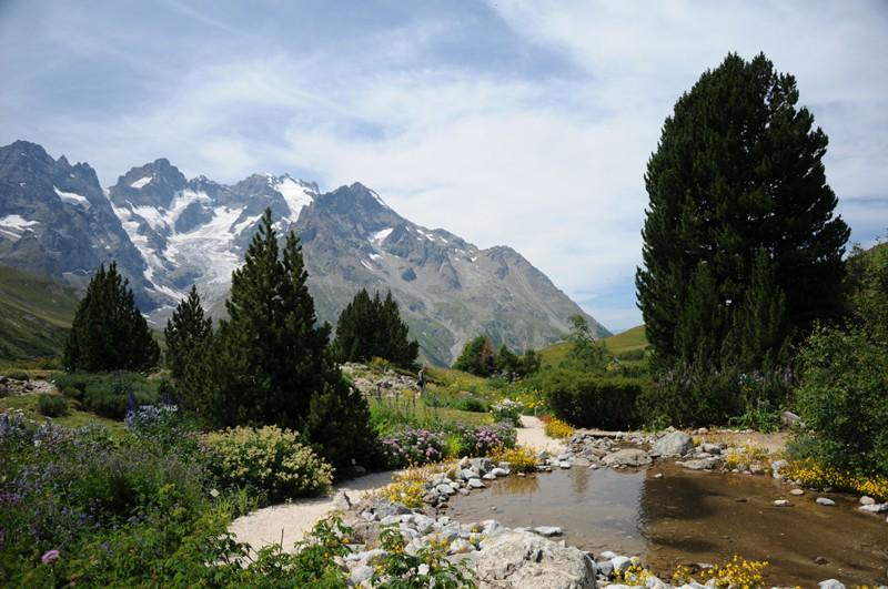jardin alpin du lautaret Nik_0110