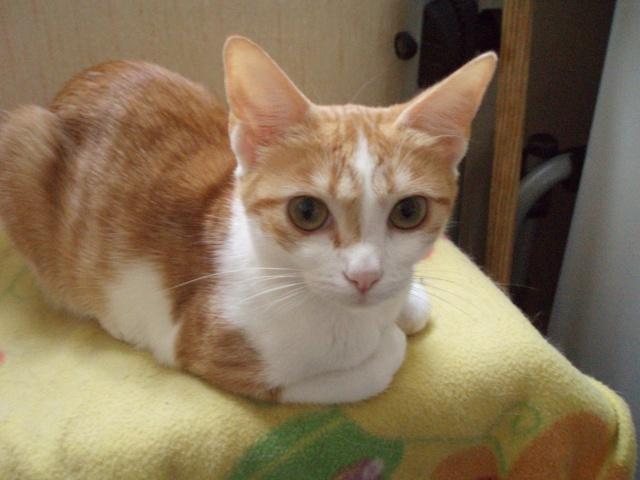 Petite chatte à donner 4_01410