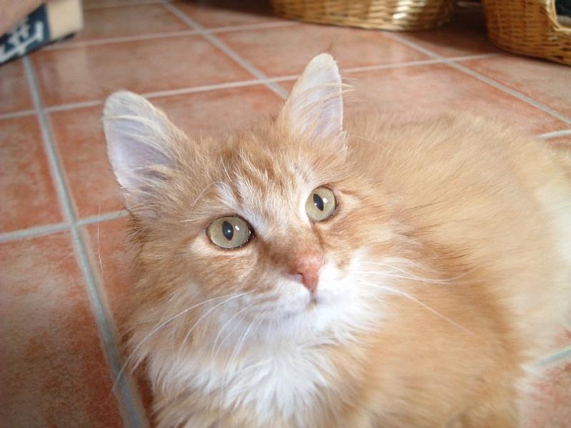 Yeux de chats Baryto39