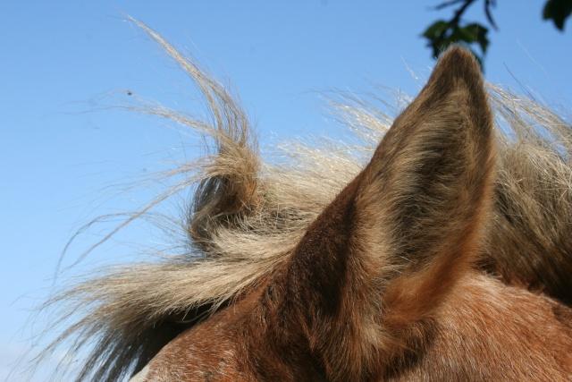 Vos plus belles grimaces de cheval et photos gag .... - Page 6 00111