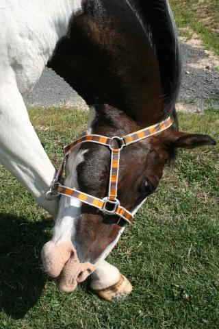 Vos plus belles grimaces de cheval et photos gag .... - Page 6 01613