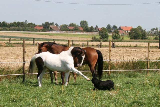 Vos plus belles grimaces de cheval et photos gag .... - Page 6 01911