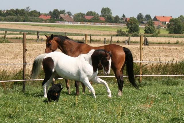 Vos plus belles grimaces de cheval et photos gag .... - Page 6 02012