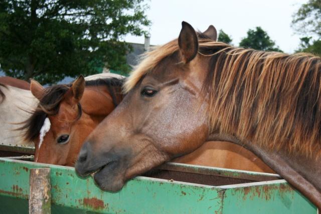 Vos plus belles grimaces de cheval et photos gag .... - Page 6 04312
