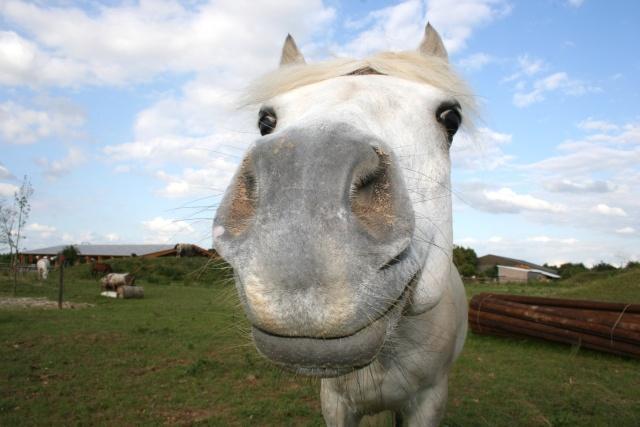 Vos plus belles grimaces de cheval et photos gag .... - Page 6 067_mo10