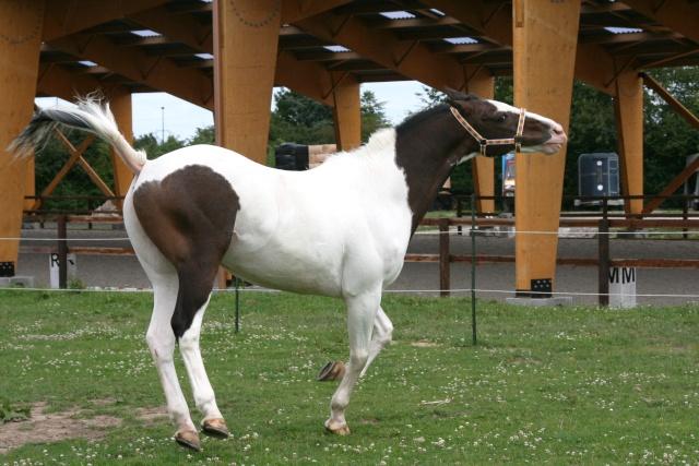 Vos plus belles grimaces de cheval et photos gag .... - Page 6 09311