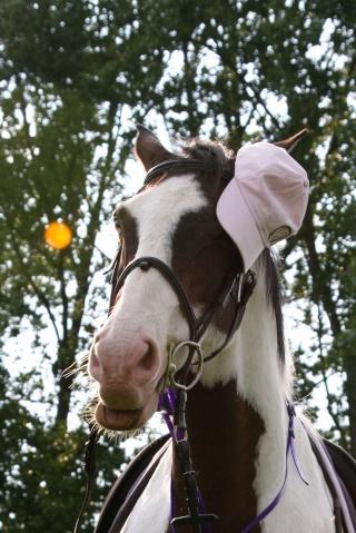 Vos plus belles grimaces de cheval et photos gag .... - Page 6 15311