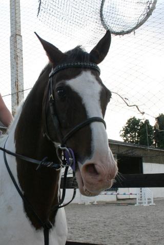 Vos plus belles grimaces de cheval et photos gag .... - Page 6 17111