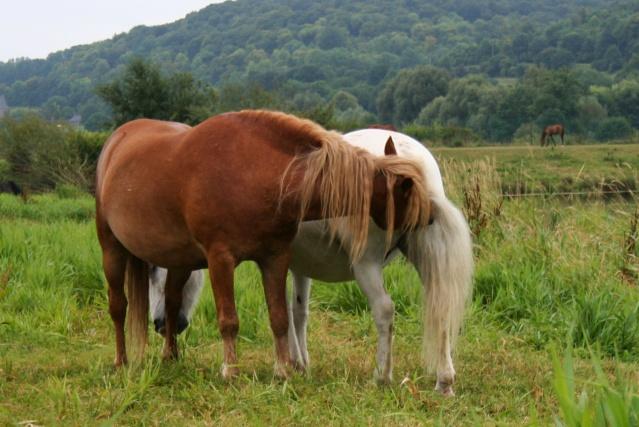 Vos plus belles grimaces de cheval et photos gag .... - Page 6 18911