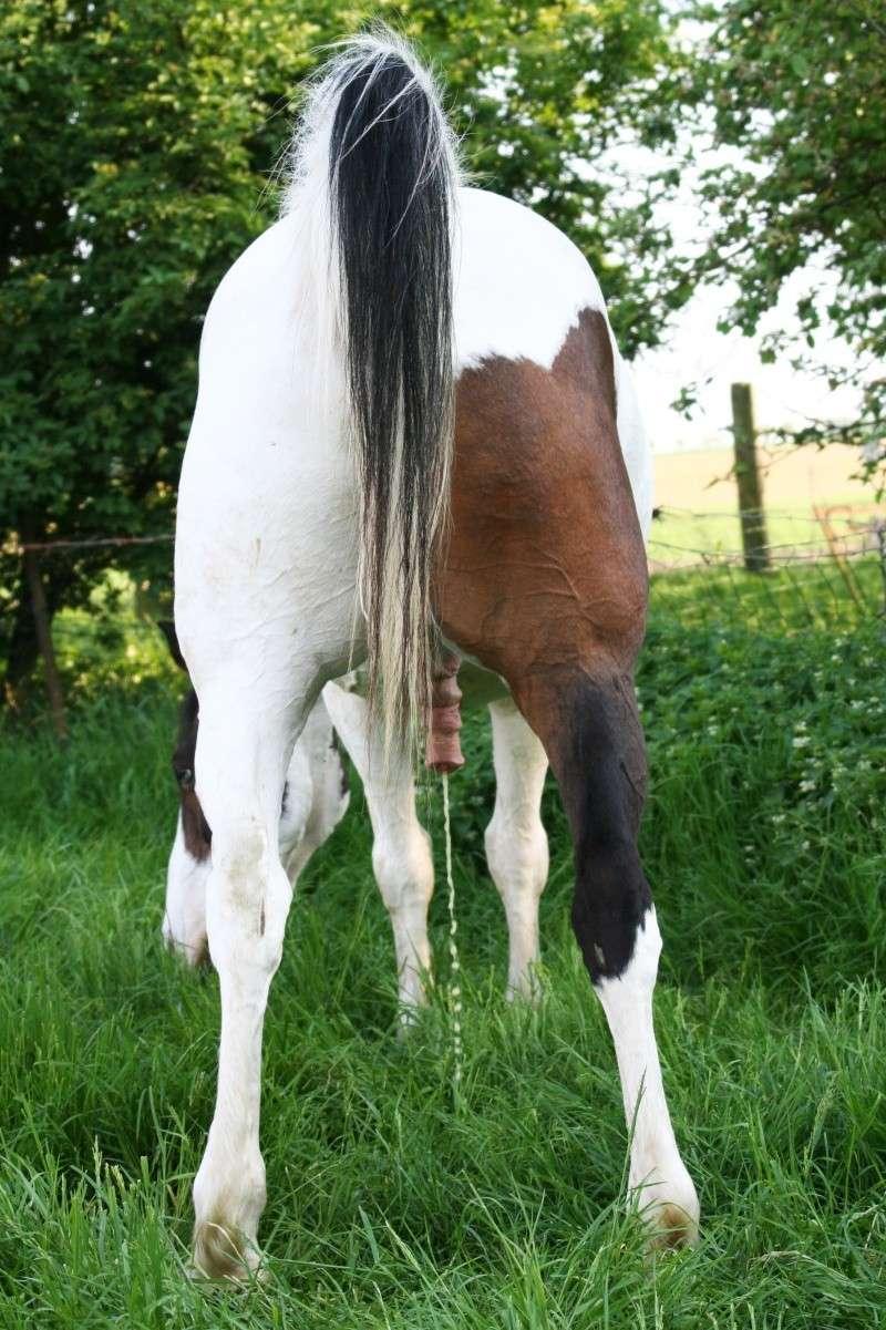 Vos plus belles grimaces de cheval et photos gag .... - Page 6 21310