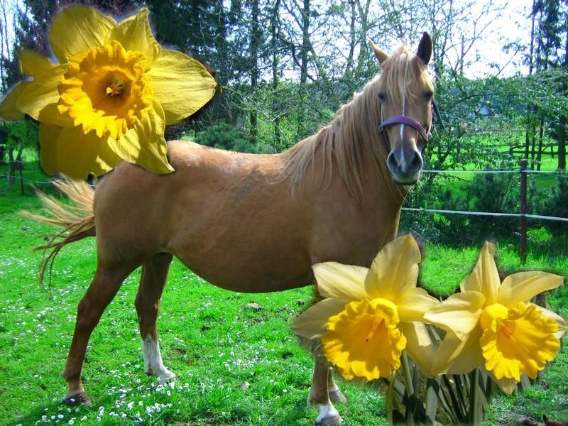 Sur ce forum l'amour des chevaux est Roi