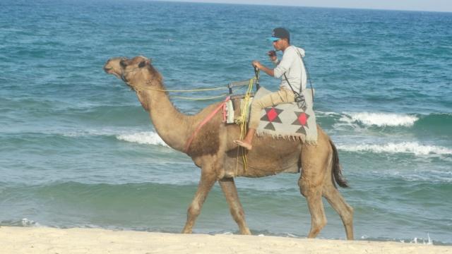 LA TUNISIE 34200910
