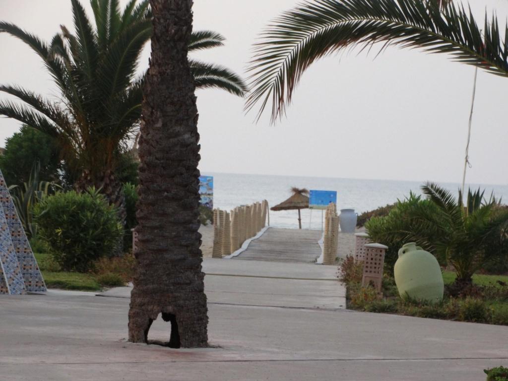 LA TUNISIE - Page 2 35671611