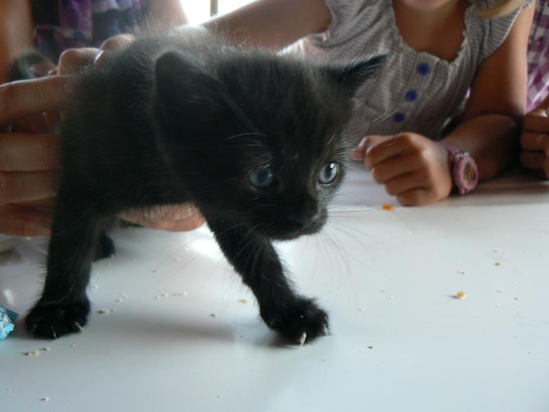 Réglisse, chaton de 1 mois P1020816