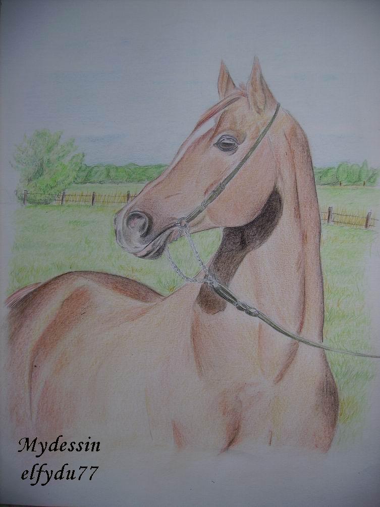 desssin cheval arabe 2ki0m110