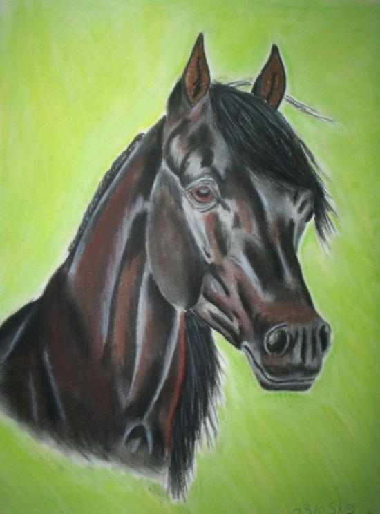 desssin cheval arabe 72130810