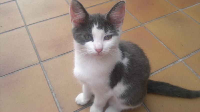 Pourriez-vous m'aider à retrouver ma petite chatte perdue qui s'appelle Lilou? Lilou110