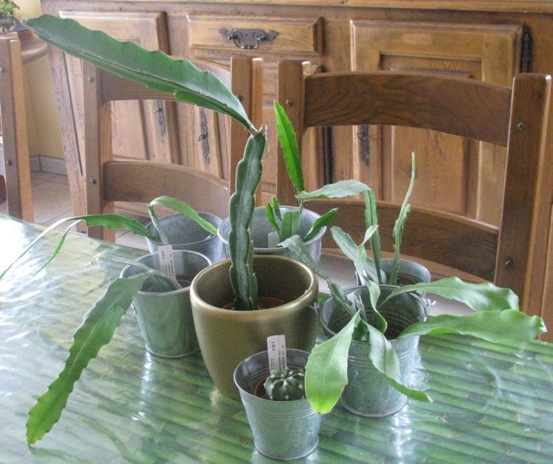 Ma commande d'Epiphyllums et Autre ... Img_5814