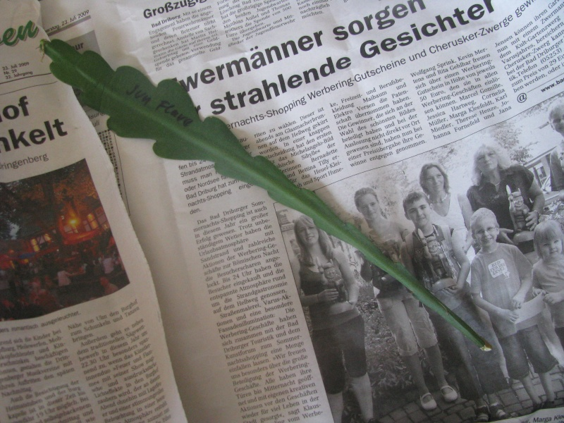 Graines d'Epiphyllum   ....    &  Bouture .... Img_6014