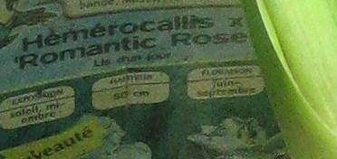 Hémérocalle Romantique Rose ??? Img_9611