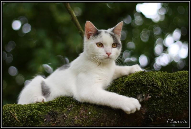 Hades sur un arbre perché Hades10