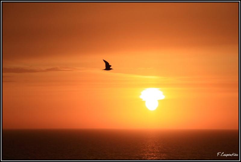 Lever ou coucher de soleil - Page 4 Mouett10