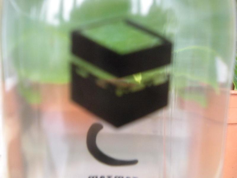 Zamzam, une eau aux vertus miraculeuses très prisée par les pèlerins Dscn3510