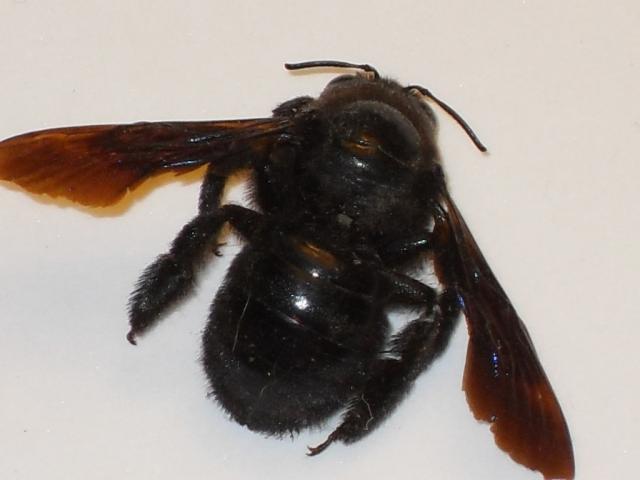 Les animaux dans la nature Insect12