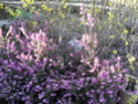 Je parle de mon jardin Bruyar10