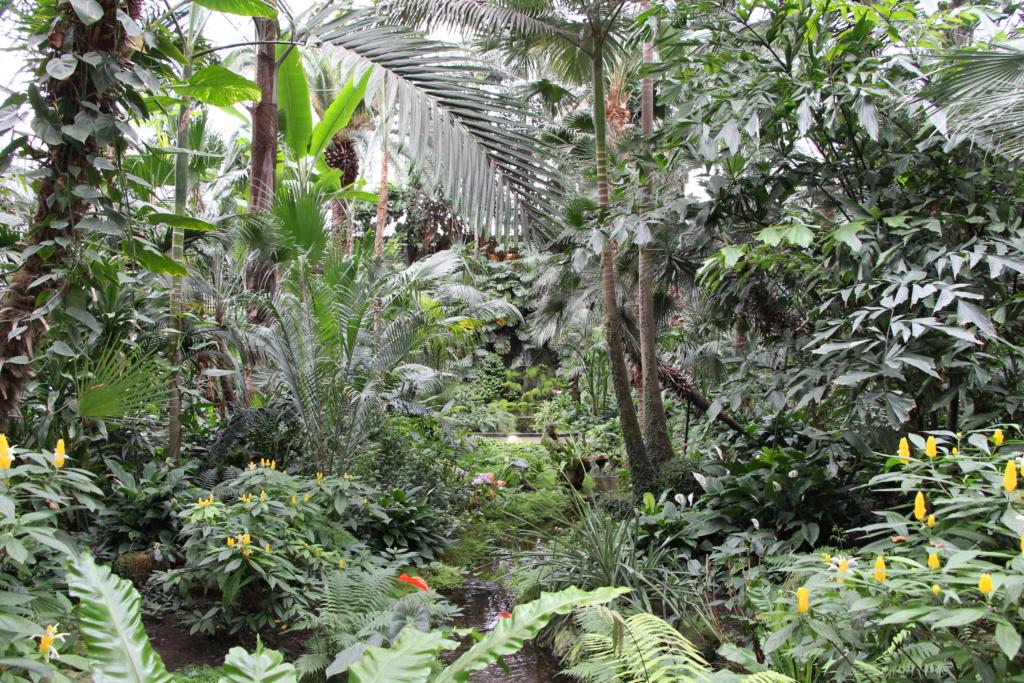 Exposition au Palmengarten de Frankfort Img_4511