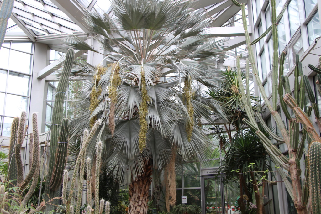 Exposition au Palmengarten de Frankfort Img_4515