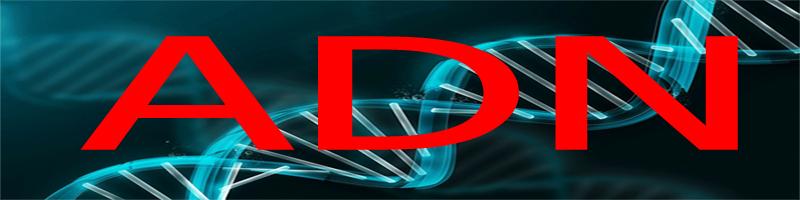 créer un forum : ADN Adn_0410